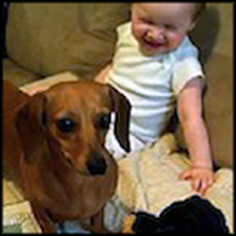 A Dachshund Gives This Baby Uncontrollable Giggles