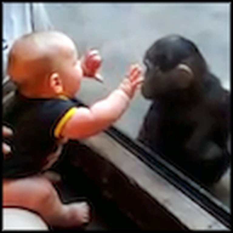 Baby and Young Chimp Can't Get Enough of Each Other
