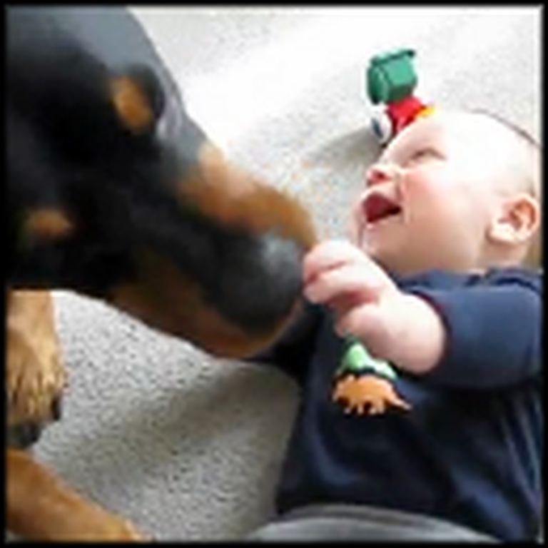Huge Lovable Dog Causes a Baby Laugh Attack
