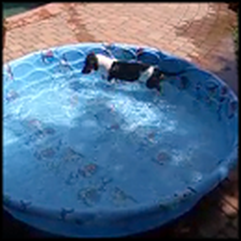 Weiner Dog Loves a Kiddie Pool More Than Anything