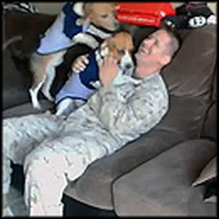 Two Beagles Cry Together Over Daddy Coming Home