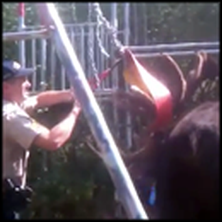 A Moose Gets Caught in a Swingset - But Watch What this Sheriff Does