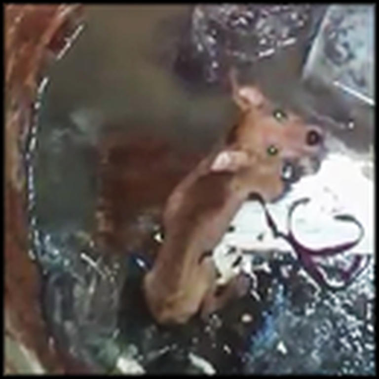 The Heartwarming Rescue of a Poor Puppy Stuck in a Well
