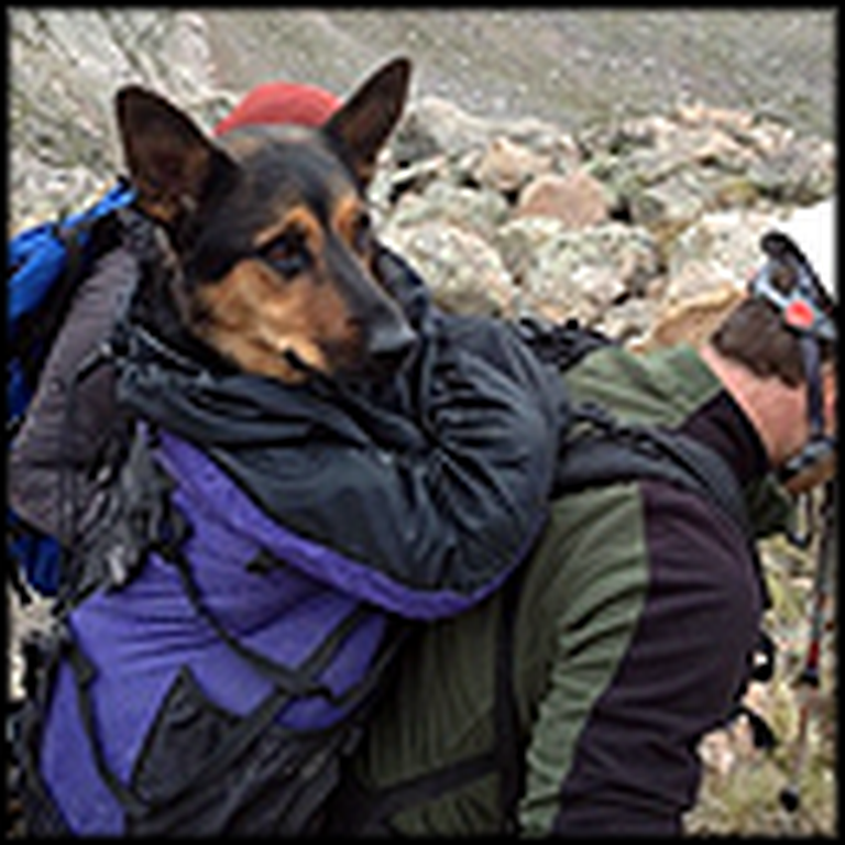 Amazing Rescue of a Dog Stuck on a Mountain for 8 Days