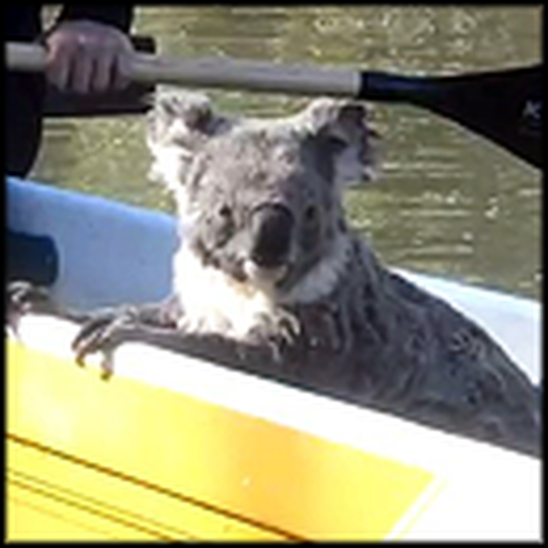 Australian Campers Get the Most Unusual Visitor Ever