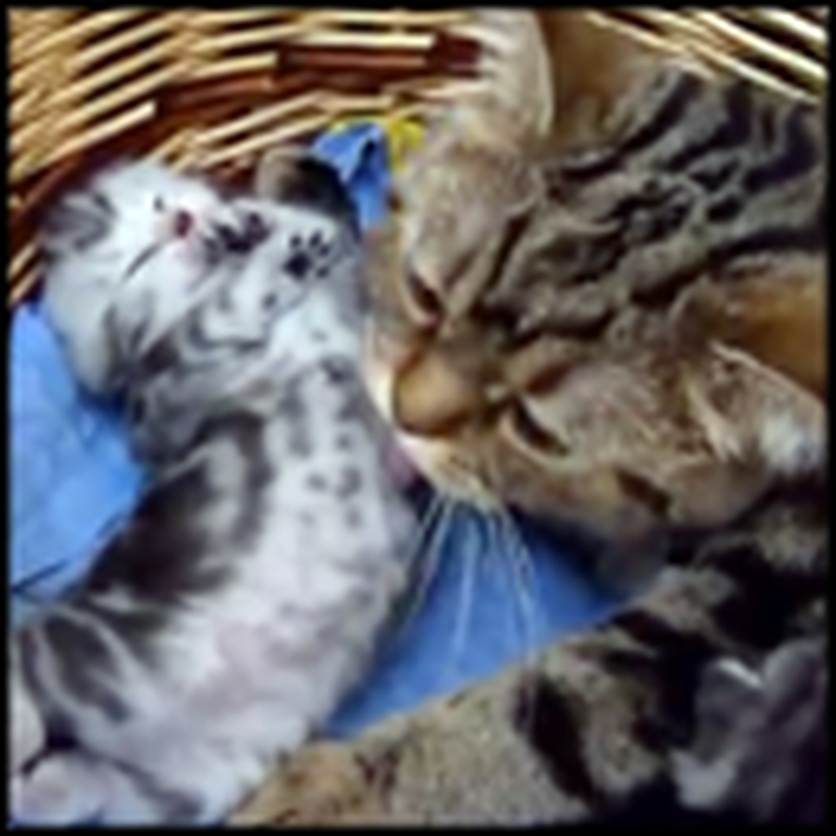 Mama Cat Takes Care of her Kitty in a Way That'll Melt Your Heart