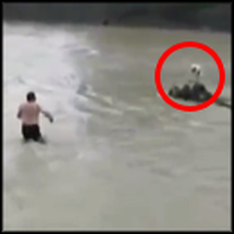 Frightened Dog Trapped in the Middle of a River Gets a Heroic Rescue