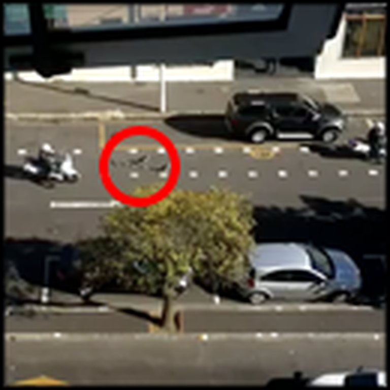 Family of Geese Get Trapped in the Middle of Traffic - But Watch This