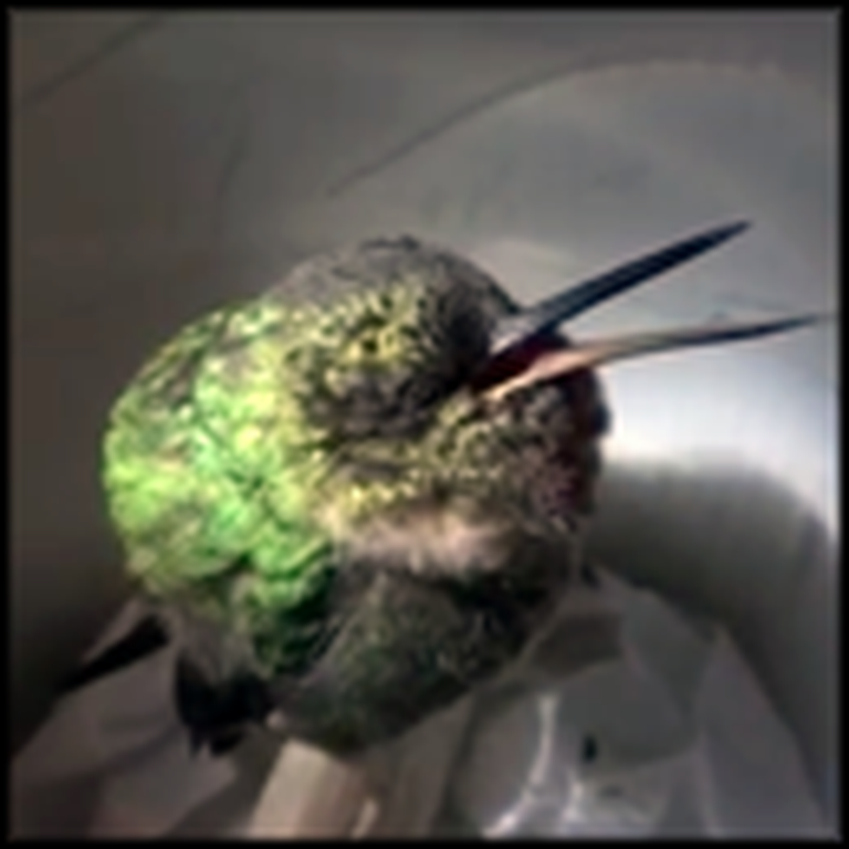 A Snoring Hummingbird That Will Make Your Day