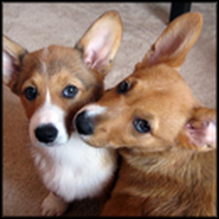 Ten Puppies Cause Cute Chaos All Over - So Adorable