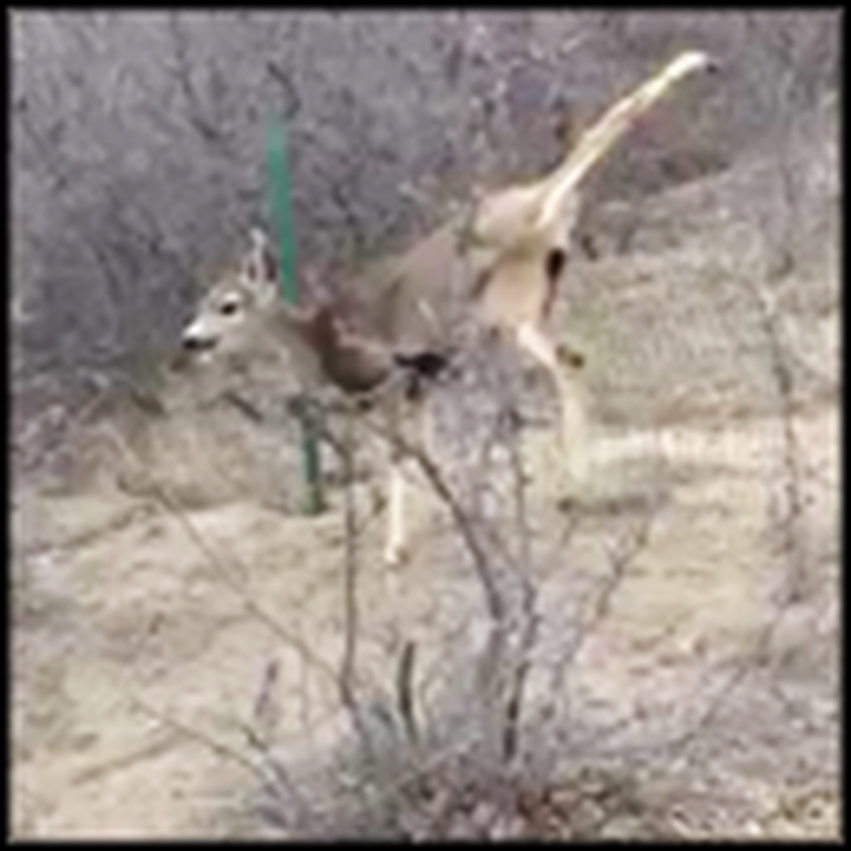 Poor Deer Trapped in a Fence Gets Some Help