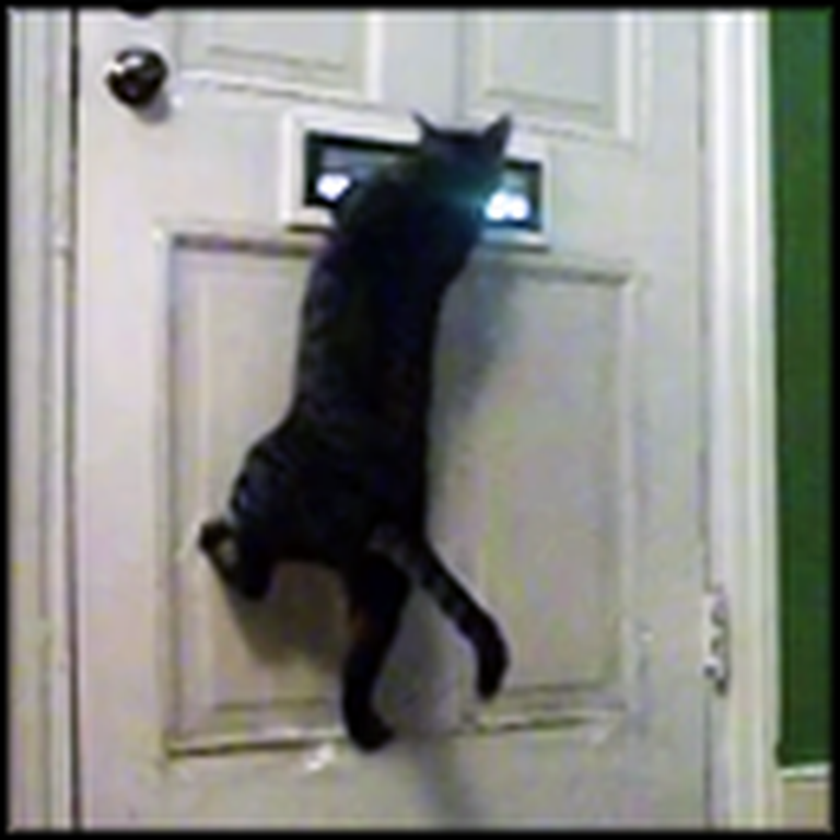 Cat Does Something Hilarious When the Mail Comes
