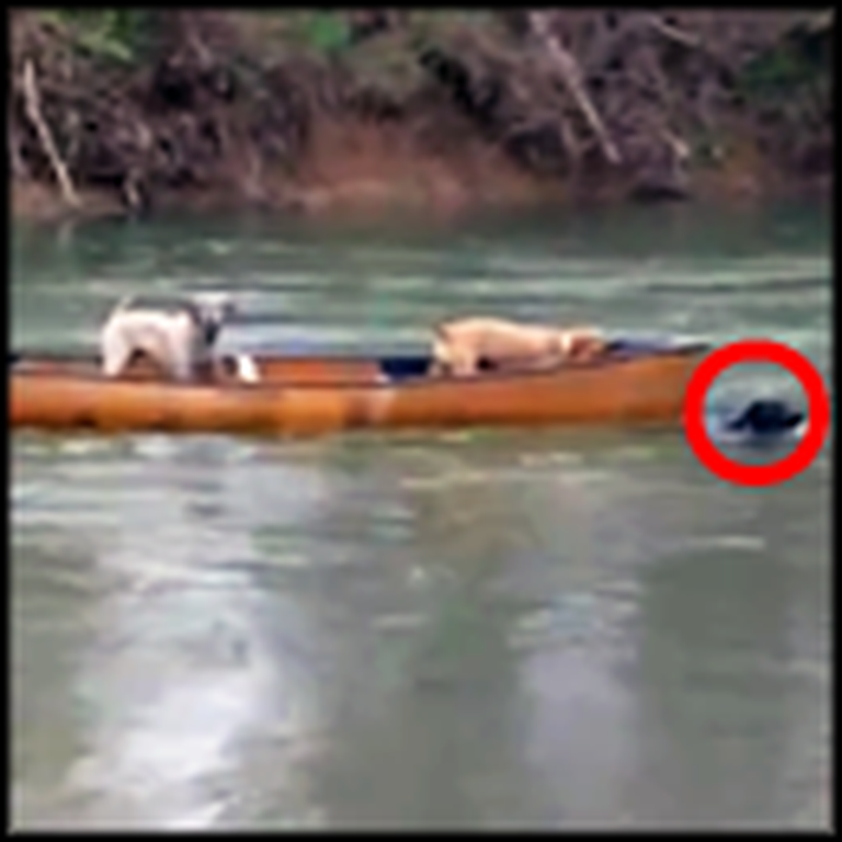 Brave Dog Rescues his Doggy Friends in a Runaway Canoe