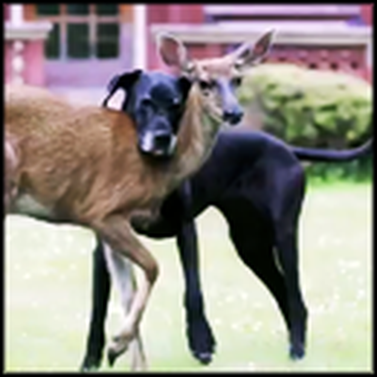 Dog and Deer Share a Bond You Won't Believe