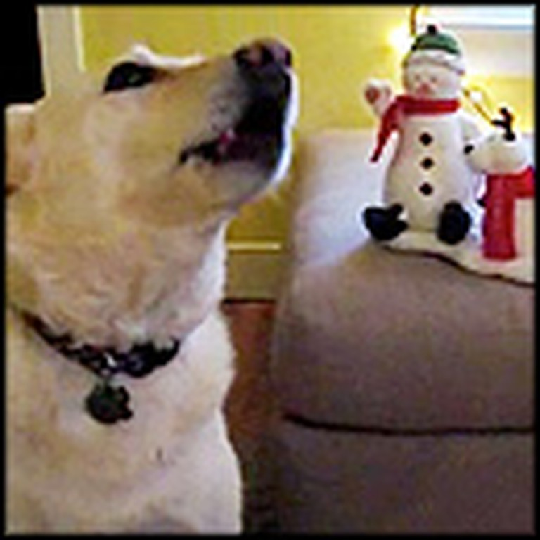 Dog Does the Cutest Thing When Jingle Bells Starts Playing