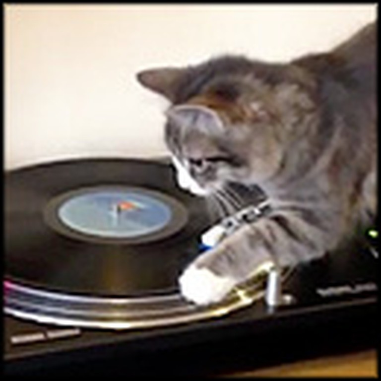 Curious Kitten Does the Cutest Thing with a Record Player