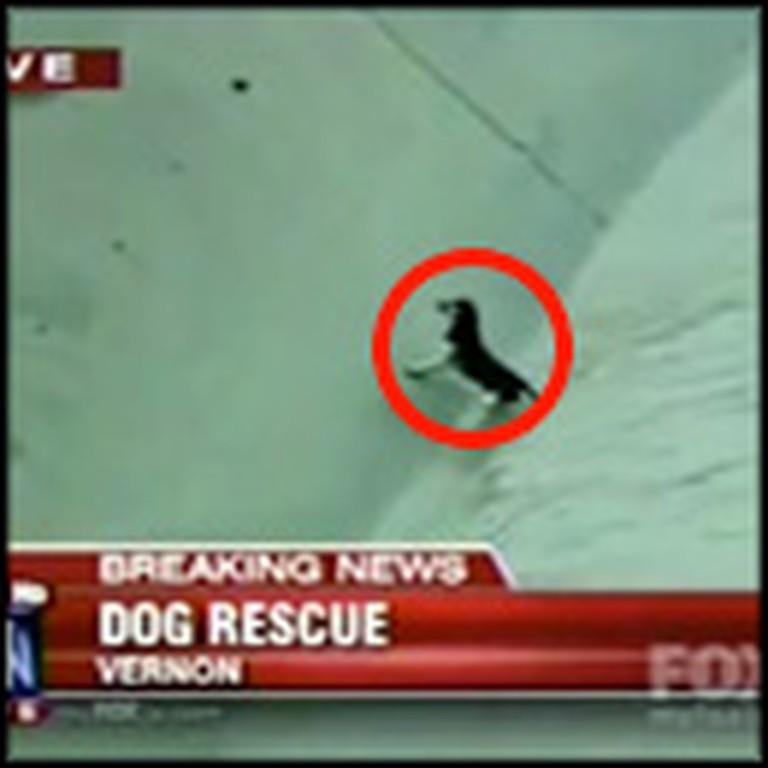 Dramatic Rescue of a Dog in Danger Caught on Tape