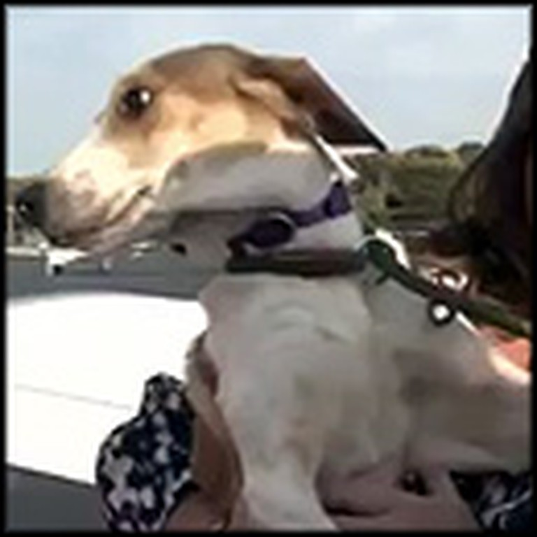 Miracle Dog Miraculously Survives Being Euthanized