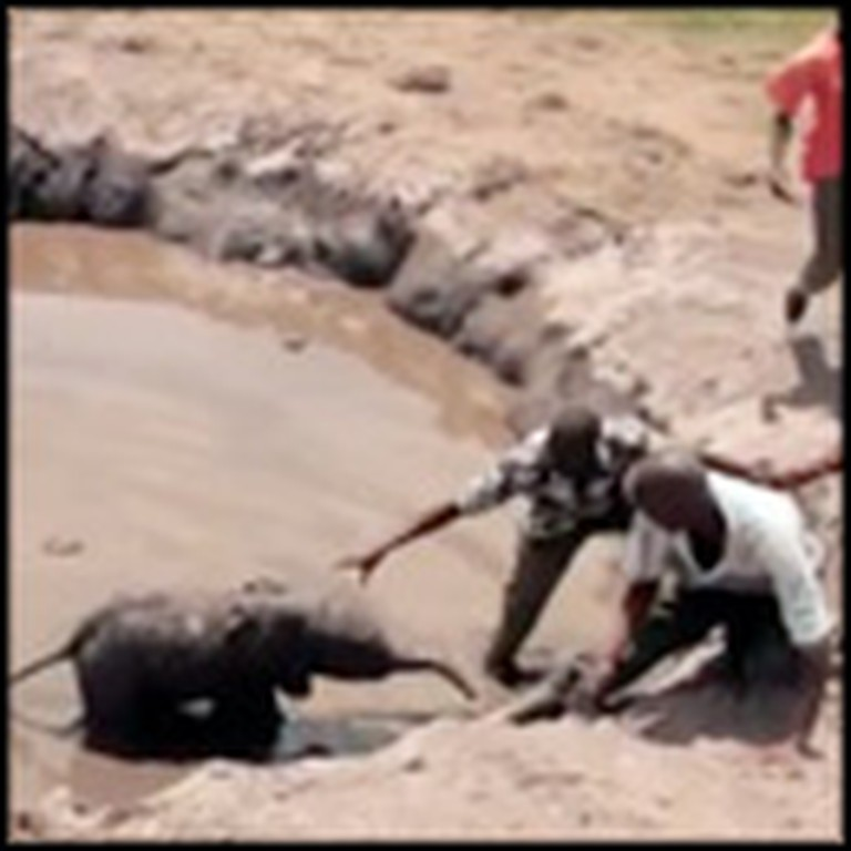 Baby Elephant Gets Rescued From a Terrible Fate
