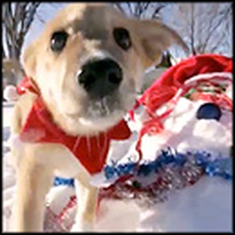 Adorable Christmas Puppies Frolick in the Snow