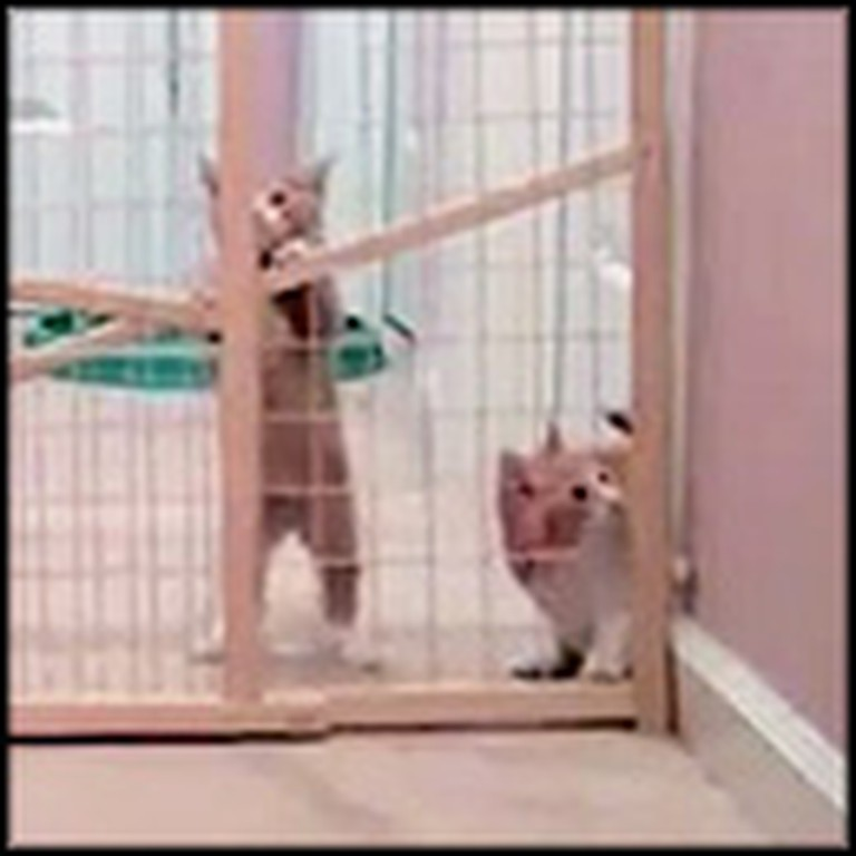 2 Adorable Kittens Make the Escape of the Century