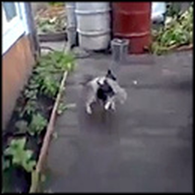 Adorable Dog Gives His Cat Buddy a Lift