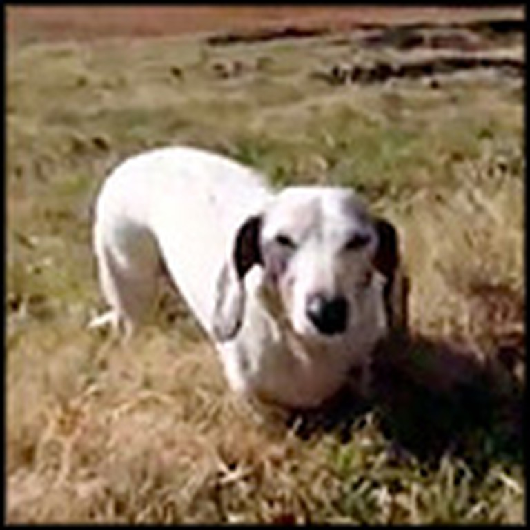 Blind, Deaf, 3-Legged Dog Saves Family From Tragic Fire