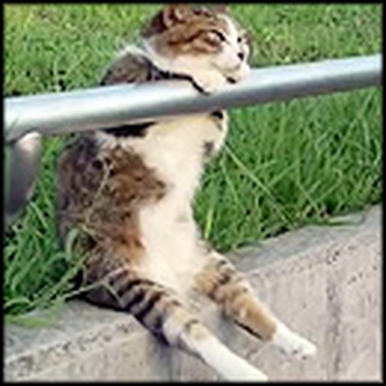Relaxed Cat Hangs Out on the Sidewalk