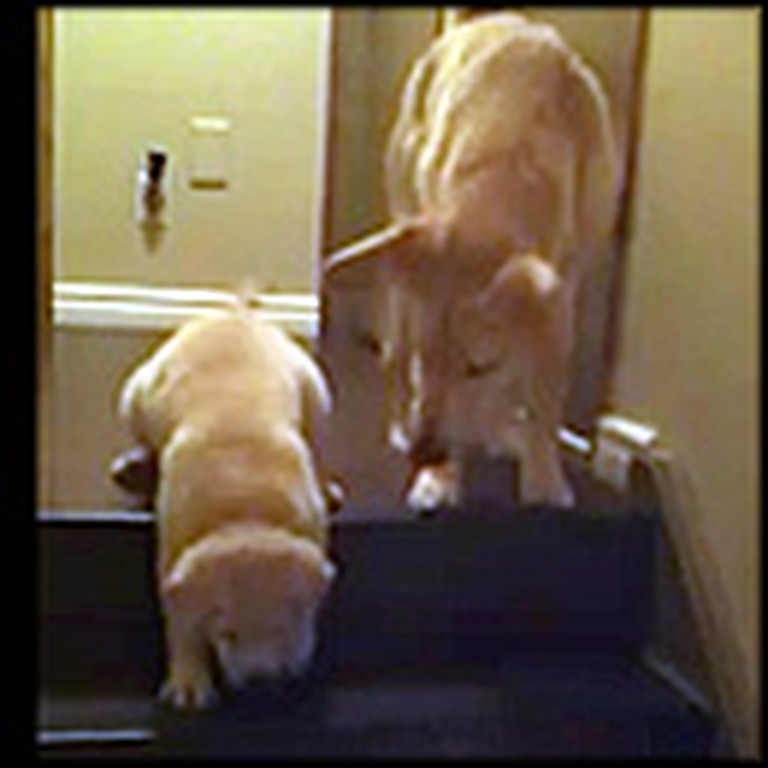 Helpful Dog Teaches a Puppy How to Go Down Stairs