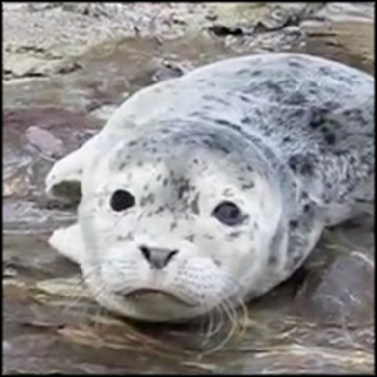 Injured and Abandoned Newborn Seal Gets Rescued