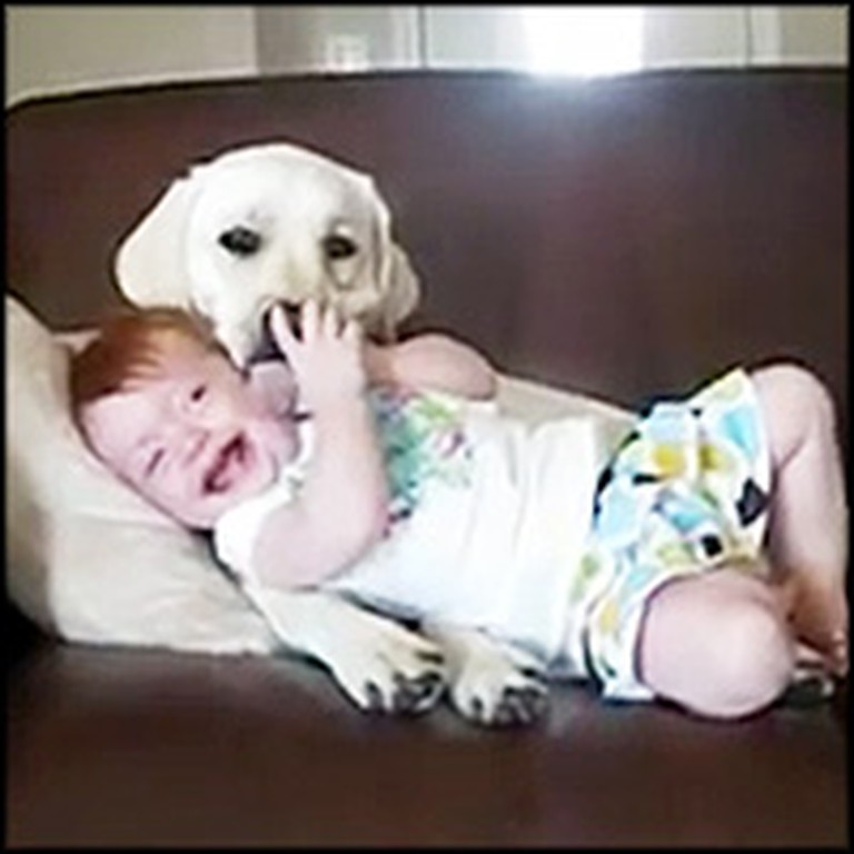 Best Compilation Video of Babies Laughing at Dogs