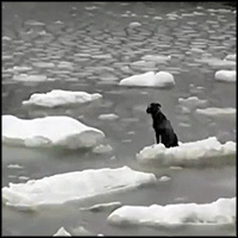 Fishermen Bravely Save a Dog Stranded on an Iceberg