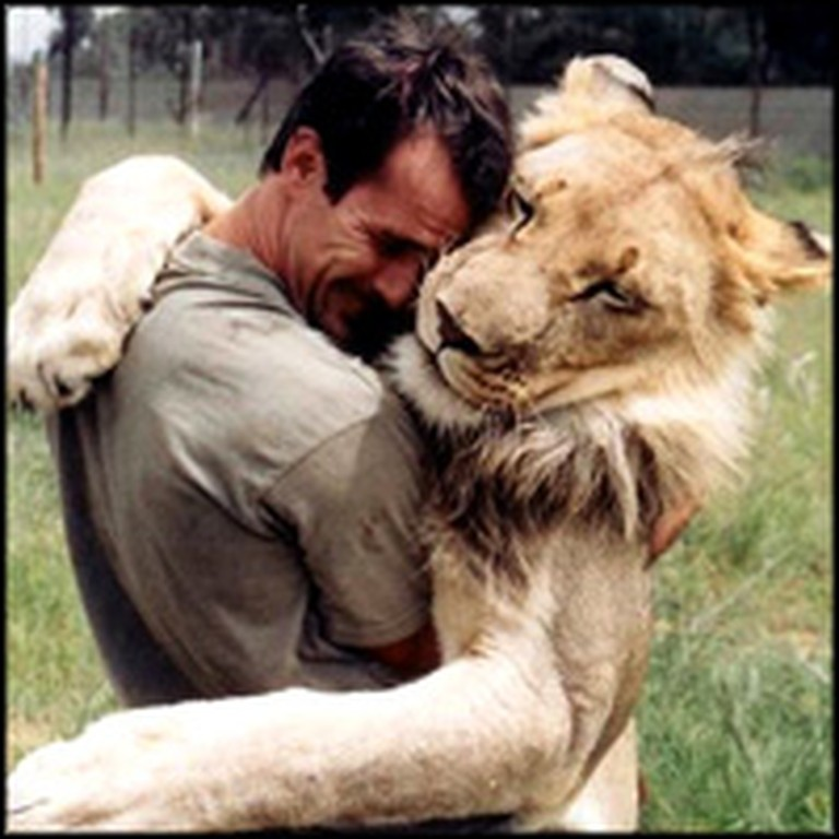 38 Wild Lions Shockingly Accept One Man as Part of Their