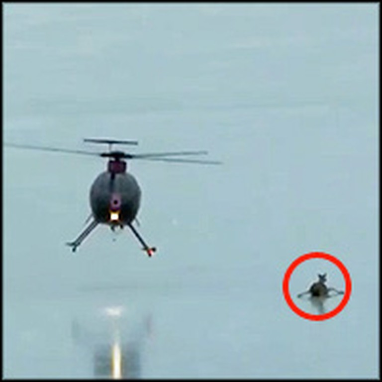 Helicopter Heroes Rescue a Deer and her Fawn from Certain Death