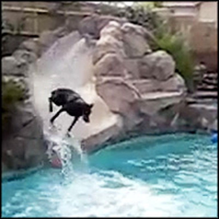 Hilarious Dog Uses the Pool Water Slide to Cool Off
