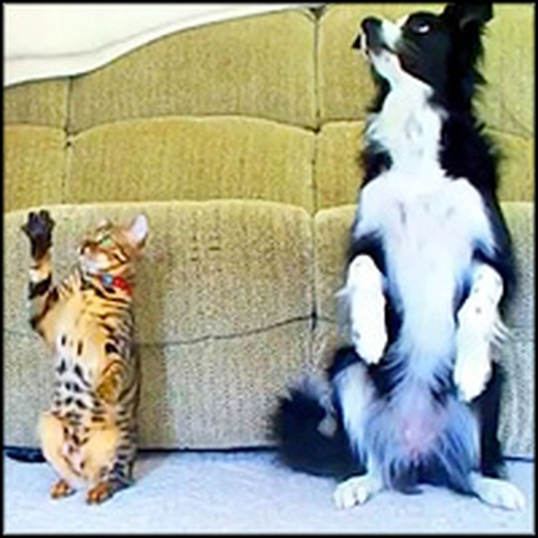 Smart Cat and Dog Have a Great Trick Competition