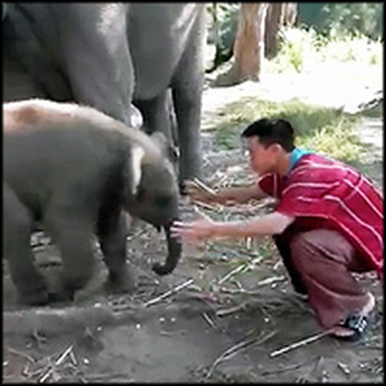 Playful Baby Elephant Loves to Cuddle