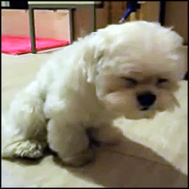 Extremely Sleepy and Adorable Puppy Will Melt Your Heart to Pieces
