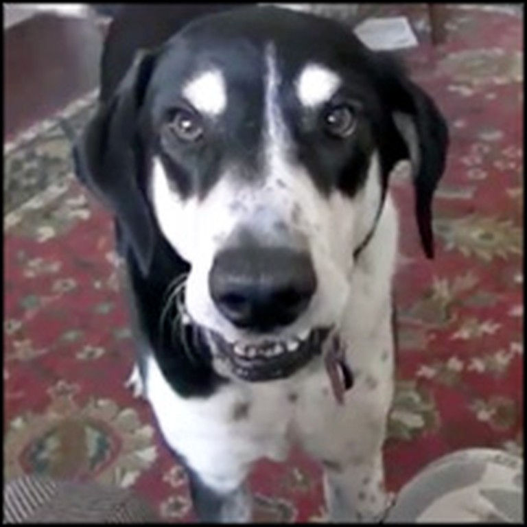 Funny Doggie Desperately Wants a Kitten