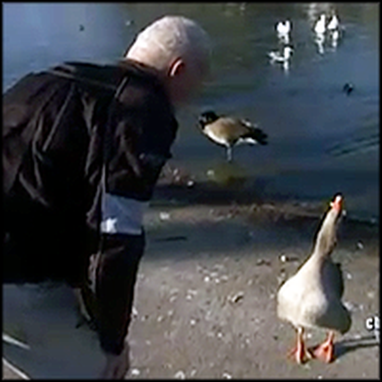 Man and Park Goose Have the Sweetest Bond