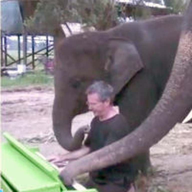 Peter the Elephant Discovers a Green Piano