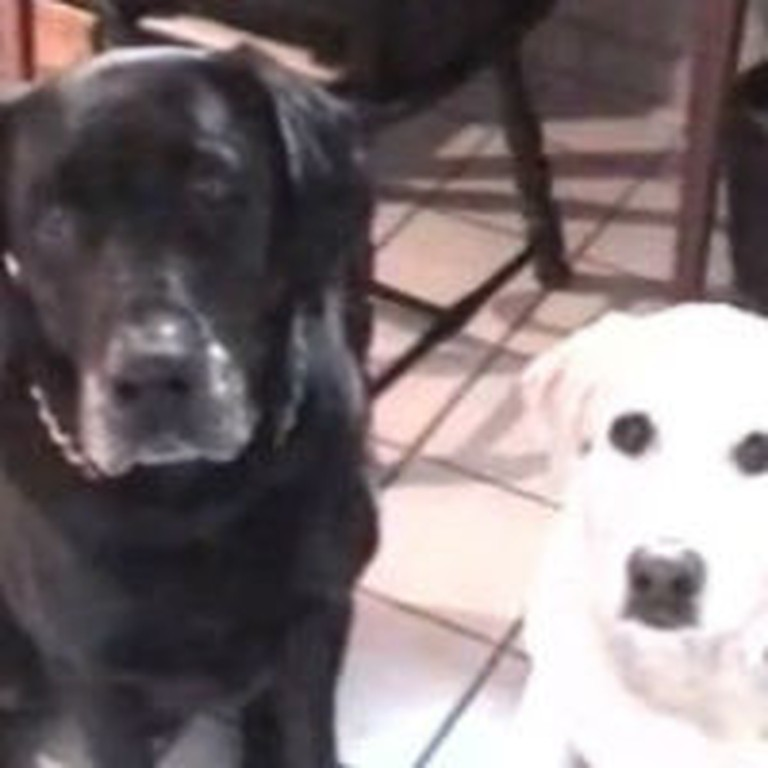 So Cute! Dog Introduces His Girlfriend To The Parents