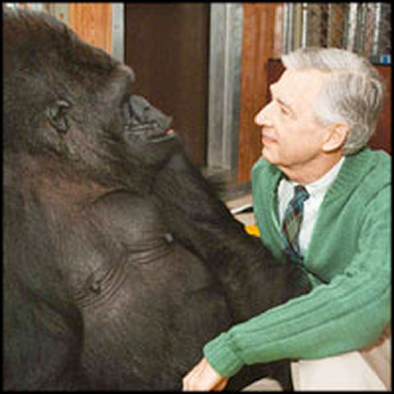 Amazing Talking Gorilla Tells Mr. Rogers She Loves Him