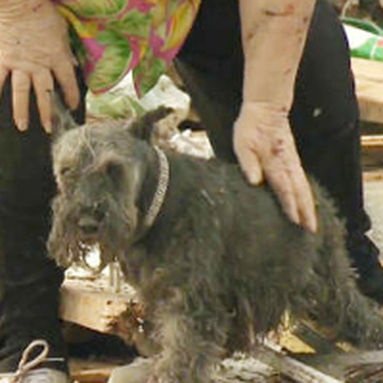 Woman Lost Her Dog When a Tornado Destroyed Her Home - God Answered Her Prayers