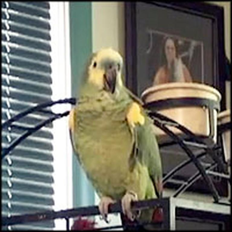 Highly Intelligent Bird Recites the Lord's Prayer