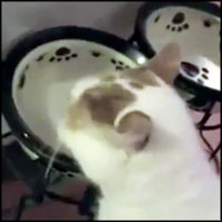 Adorable Cat Makes Hilarious Baby Noises