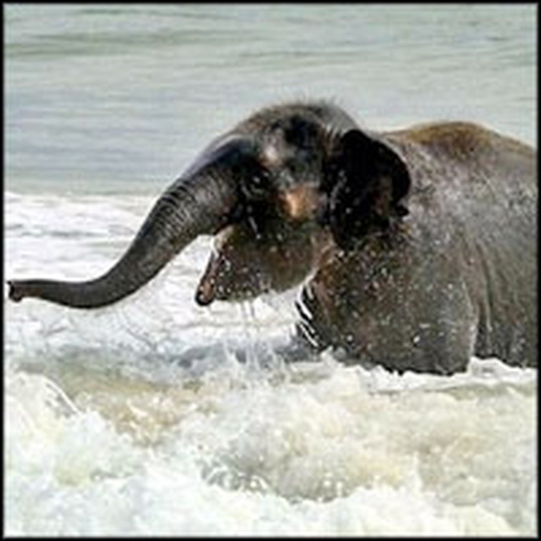 Baby Elephant Joyfully Plays in the Ocean for the Very First Time