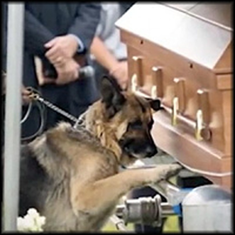 Loyal Dog Mourns Slain Officer & Closest Companion at Graveside