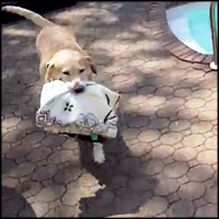 Smart Pooch Brings His Own Towel to the Swimming Pool