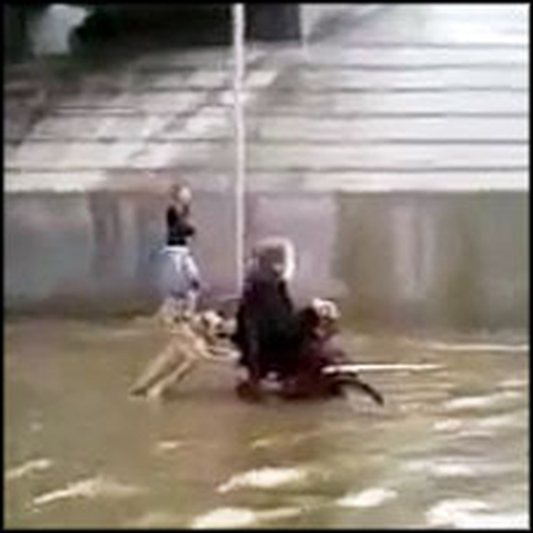 Heroic Dog Helps his Handicapped Owner Home During Flash Flood